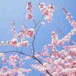 7 Indirizzi per le giornate di Primavera!